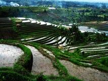riceterrass Arkivbilder