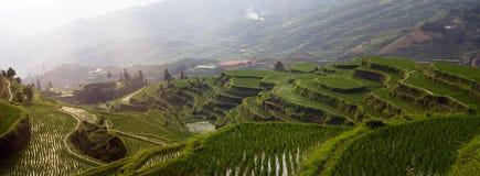 Riceterrass på berg arkivbilder