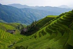 riceterrasser Arkivbilder