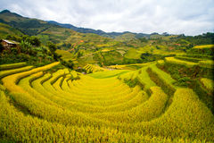 Riceterrasser Royaltyfri Fotografi