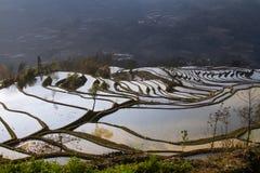 Riceterrasser Arkivbild
