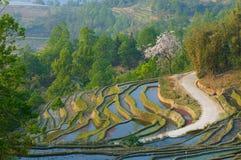 Riceterrasser av yuanyang, yunnan, porslin royaltyfri fotografi