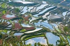 Riceterrasser av yuanyang, yunnan, porslin arkivbilder