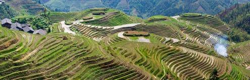 Riceterrasser i sydliga Kina Arkivfoto