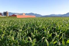 Rich Agricultural Farm Land Imagens de Stock