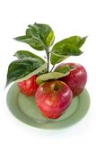 Rich apple crop Stock Images