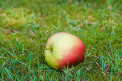 Rich apple on fresh grass Stock Photo