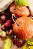 Rich autumn harvest Stock Photos