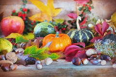 Rich autumn harvest Stock Photography