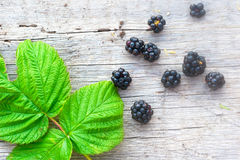 Rich blackberry and green leaf Stock Photography