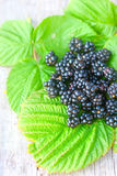 Rich blackberry on the green leafs Stock Images