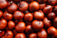 Rich brown autumn conkers background Royalty Free Stock Photo