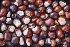 Rich brown autumn conkers from a horse chestnut tree Royalty Free Stock Images