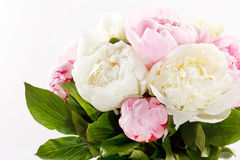 Rich bunch of peonies Royalty Free Stock Image