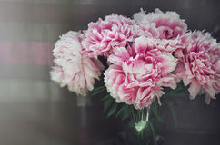 Rich bunch of pink peonies roses flowers, green leaf in glass vase on background. Rustic style. Fresh floral, home decor Royalty Free Stock Photos