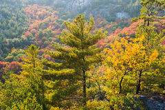 Rich colors of fall trees on a mountain slope Stock Photos