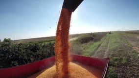 Rich Corn Yield arkivfilmer
