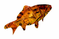 Rich Fish. Small gold fish in a dollar costume isolated on white Stock Photo