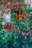 Rich flora on the facade. Of an old building - flowerpots with flowers on the window royalty free stock photography