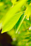 Rich foliage. Royalty Free Stock Photography