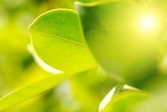 Rich foliage. Stock Image