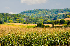 Rich, Furtile, Farm land. Beautiful landscape of rolling hills and valleys in Northeast Iowa royalty free stock image