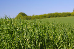 Among rich green grass #2 Royalty Free Stock Photography