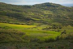 Green Mountain Meadows Near Bakers Peak in Colorado. Rich Green Mountain Meadows With Yellow WIldflowers Near Bakers Peak in Colorado stock images