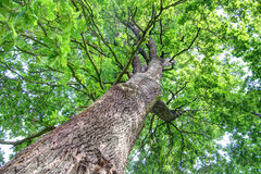 Rich green tree top view Royalty Free Stock Images