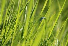 Rich green-yellow grass background. Green grass in vegetable garden Stock Photography