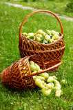 Rich harvest Stock Image
