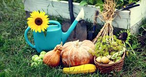 Rich Harvest in the Garden of the high beds and Garden Tools Pu. Mpkin, Apples, Onions, Garlic, Carrots, cucumbers stock photography