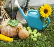 Rich Harvest in the Garden of the high beds and Garden Tools Pu. Mpkin, Apples, Onions, Garlic, Carrots, cucumbers royalty free stock photos