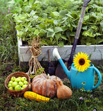 Rich Harvest in the Garden of the high beds and Garden Tools (Pu Royalty Free Stock Photos