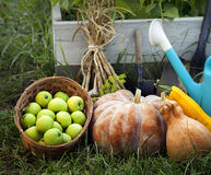 Rich Harvest in the Garden of the high beds and Garden Tools (Pu Royalty Free Stock Photo