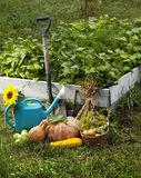 Rich Harvest in the Garden of the high beds and Garden Tools (Pu Royalty Free Stock Images