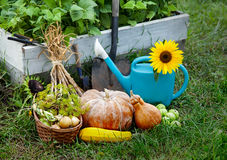 Rich Harvest in the Garden of the high beds and Garden Tools (Pu Stock Images