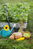 Rich Harvest in the Garden of the high beds and Garden Tools (Pu Stock Photography