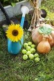 Rich Harvest i trädgården av höjdpunktsängarna och de trädgårds- hjälpmedlen & x28en; Pu Arkivfoto