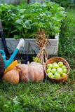 Rich Harvest im Garten der Untiefen und der Garten-Werkzeug-PUs Stockbild