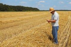Rich harvest stock images