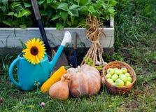 Rich Harvest no jardim das camas e do plutônio altos das ferramentas de jardim Foto de Stock