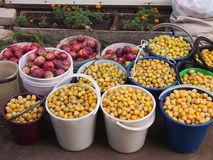 Rich harvest of plums and apples Stock Images