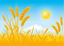Rich harvest of wheat vector illustration