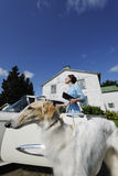 Rich lady with large dog. Wealthy woman with large Borzoi dog and vintage car royalty free stock photos