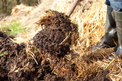 Rich organic mulch from manure and straw. Stock Photos