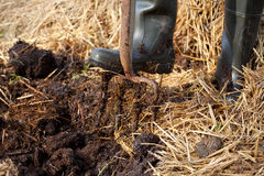 Rich organic mulch from manure and straw. Stock Photography