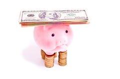 Rich pig Stock Photos