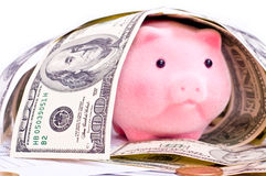 Rich pig Stock Photo