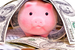 Rich pig Royalty Free Stock Images